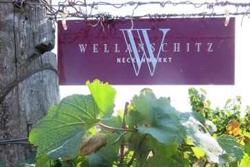 364x243 wijnmakers weingut wellanschitz